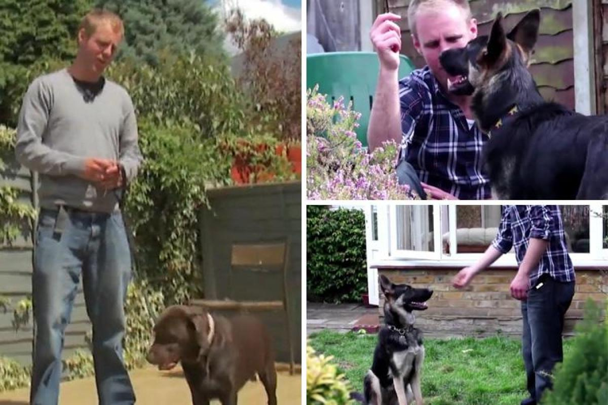 Nigel Reed Dog Trainer