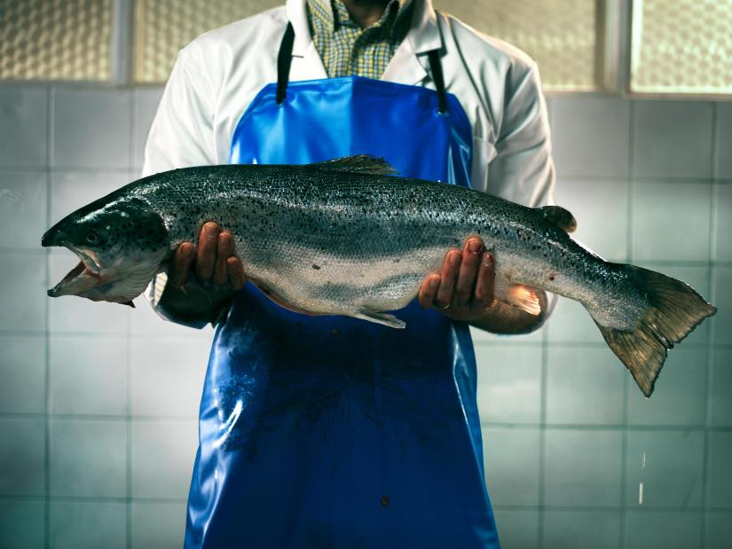 Handling salmon in a 'suspicious' way will get you in hot water