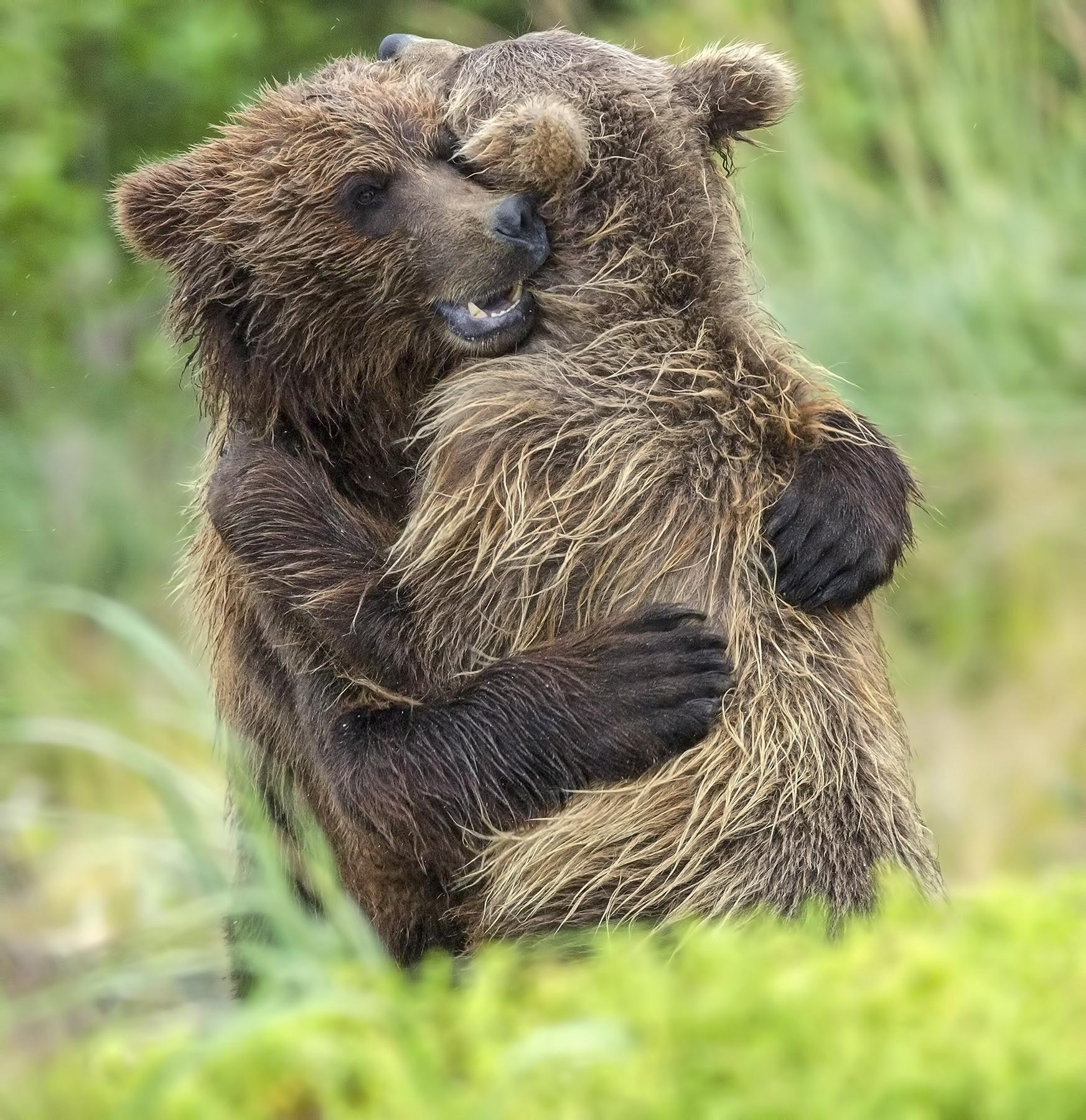 adorable moment a grizzly