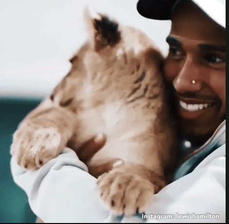 Hamilton cuddles the lion and sings the Lion King songs