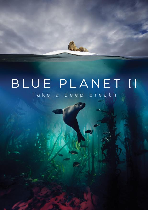 The new season of Blue Planet promises some staggering encounters