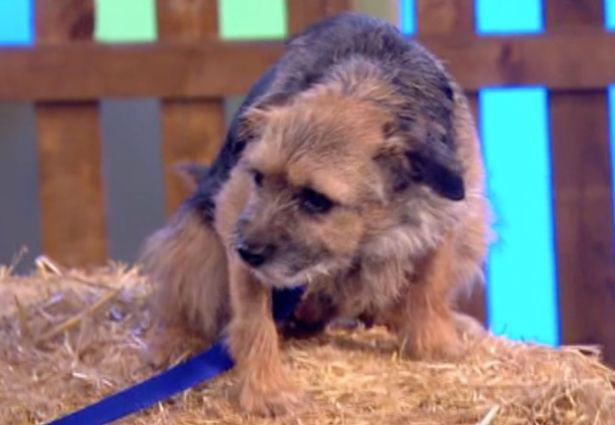 Thelma the dog went to the toilet twice on today's This Morning