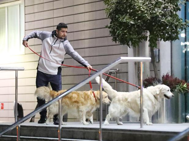 nintchdbpict000380307037 - Alexis Sanchez's dogs wear Manchester United shirts after arriving at team hotel