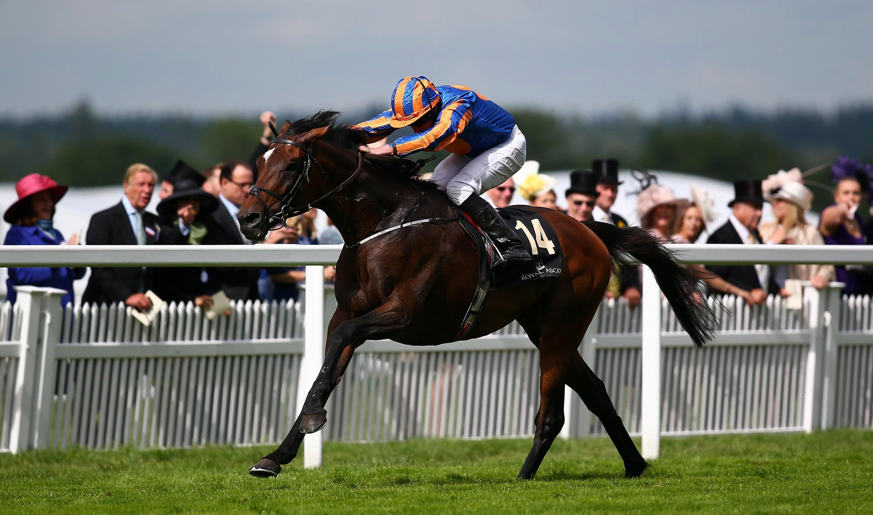 Order Of St George will be bidding to regain his title at Royal Ascot
