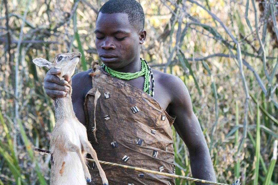 A Hadza hunter carries an antelope skewered by an arrow