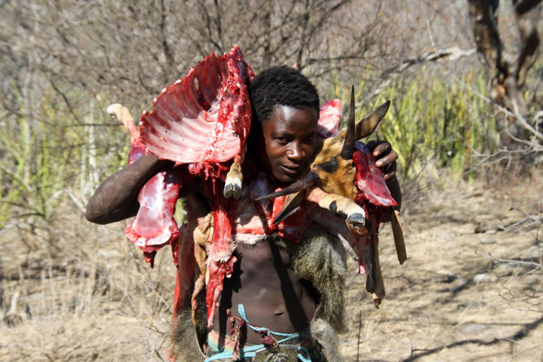 The Hadza are one of the last remaining societies remain in the world that survive purely from hunting and gathering.