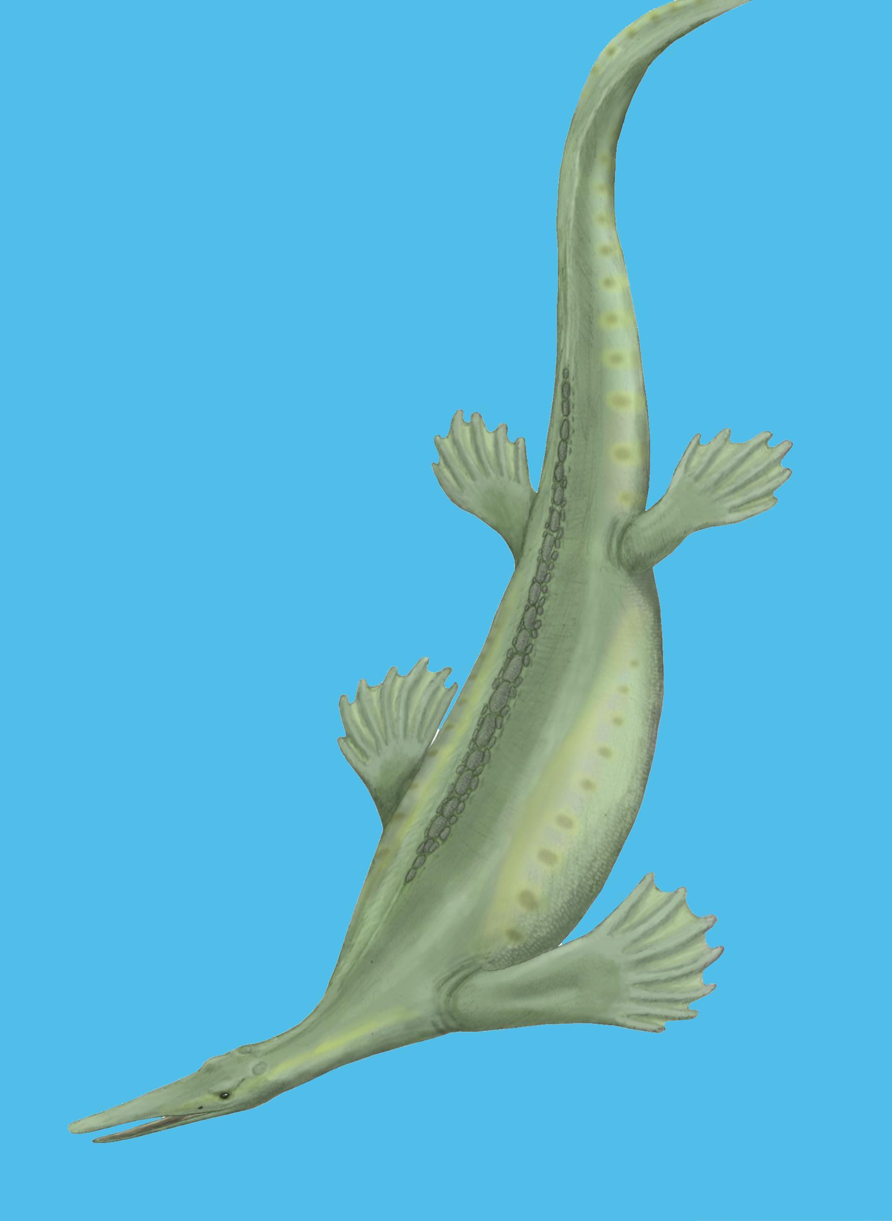 ancient predatory platypus thrived
