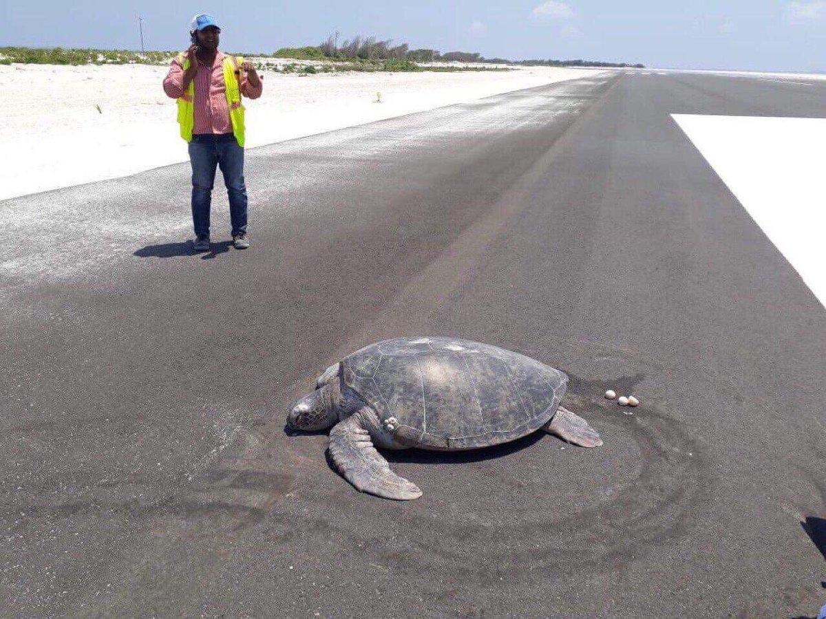 heartbreak as endangered turtle
