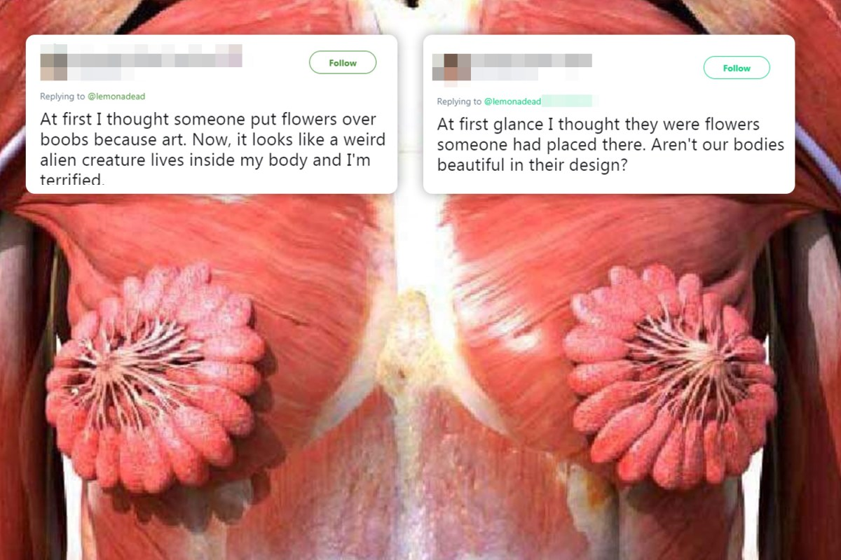 small resolution of photo showing what women s milk ducts look like goes viral and people are amazed