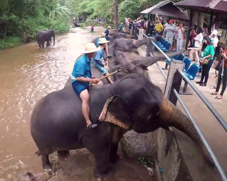 Keepers sit on the elephants as tourists feed the animals