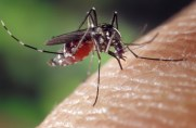 Experts have warned of a 'plague of hungry mosquitoes' set to cause misery for Brits over the coming weeks
