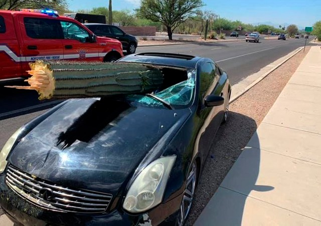 A black sports car skewered through the windshield by a giant cactus in Arizona, US