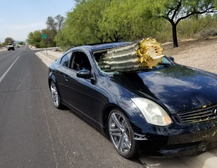The car hit the cactus, breaking it in two, after veering across a central reservation, cops said