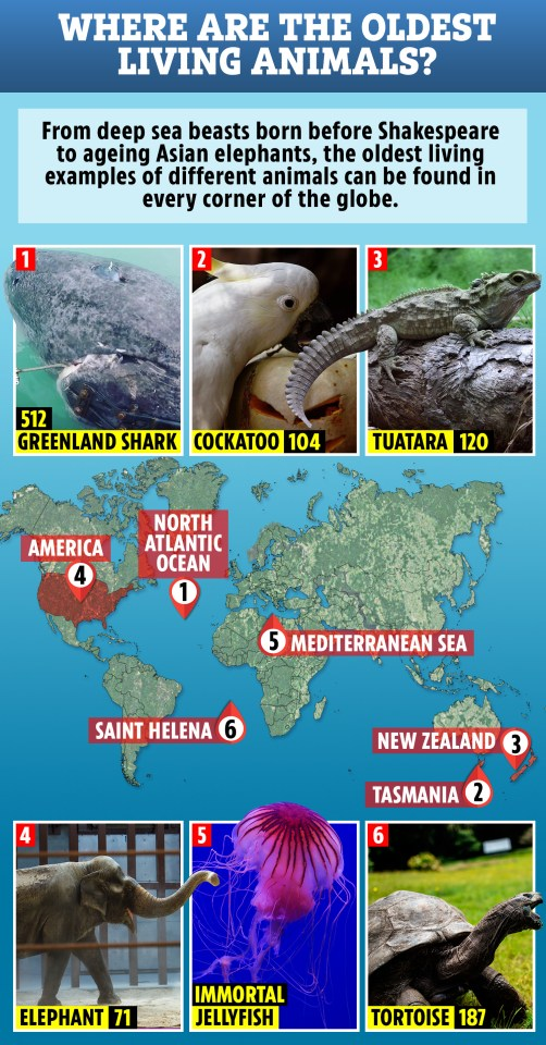 500 Year Old Map Of America.The World S Oldest Animals From The 500 Year Old Shark Born Before