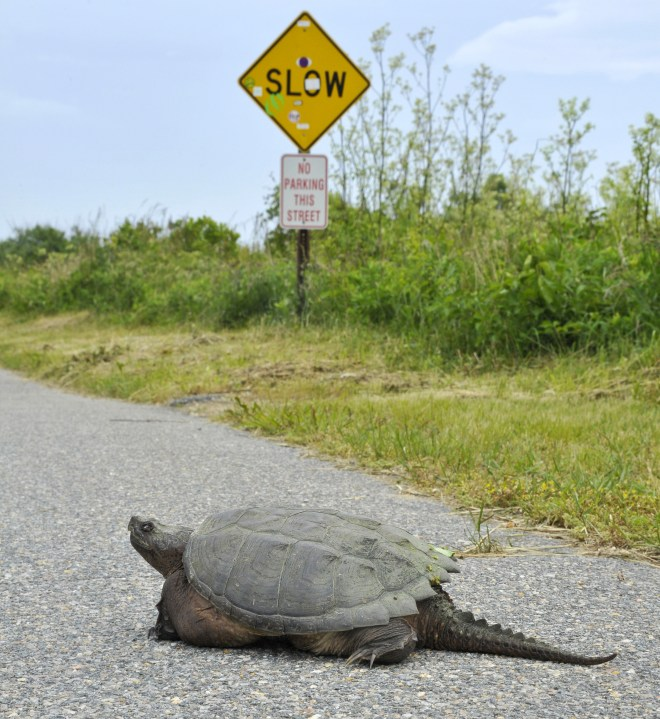 Why did the turtle cross the road? To get to the shell station