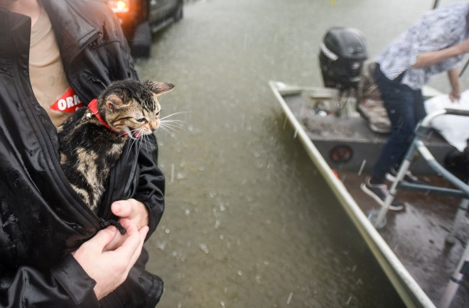Levi Kelley's cat, named Cat, meows as Kelley shelters him from the rain with his jacket. as the two were rescued