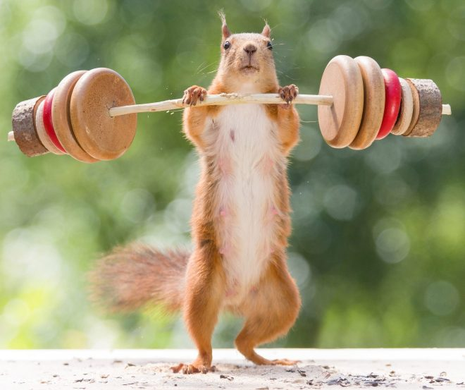 Cheeky critter makes sure to keep fit with a woodland workout