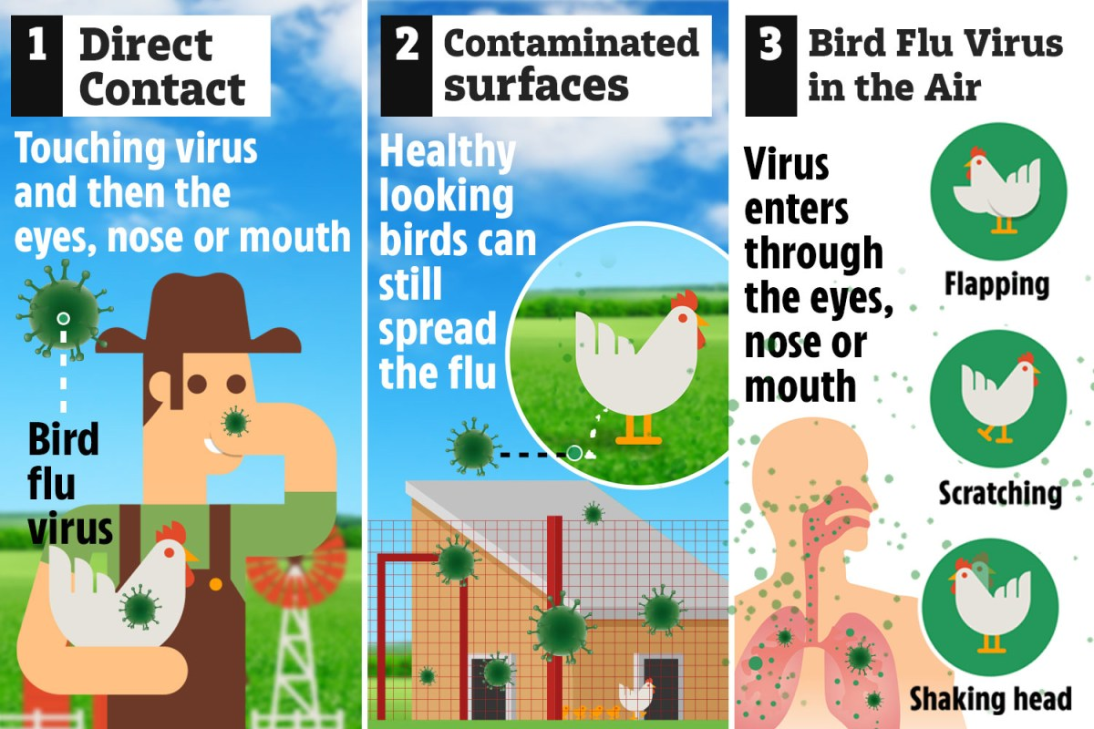 Bird flu outbreak in Suffolk could spread to people – the signs to ...