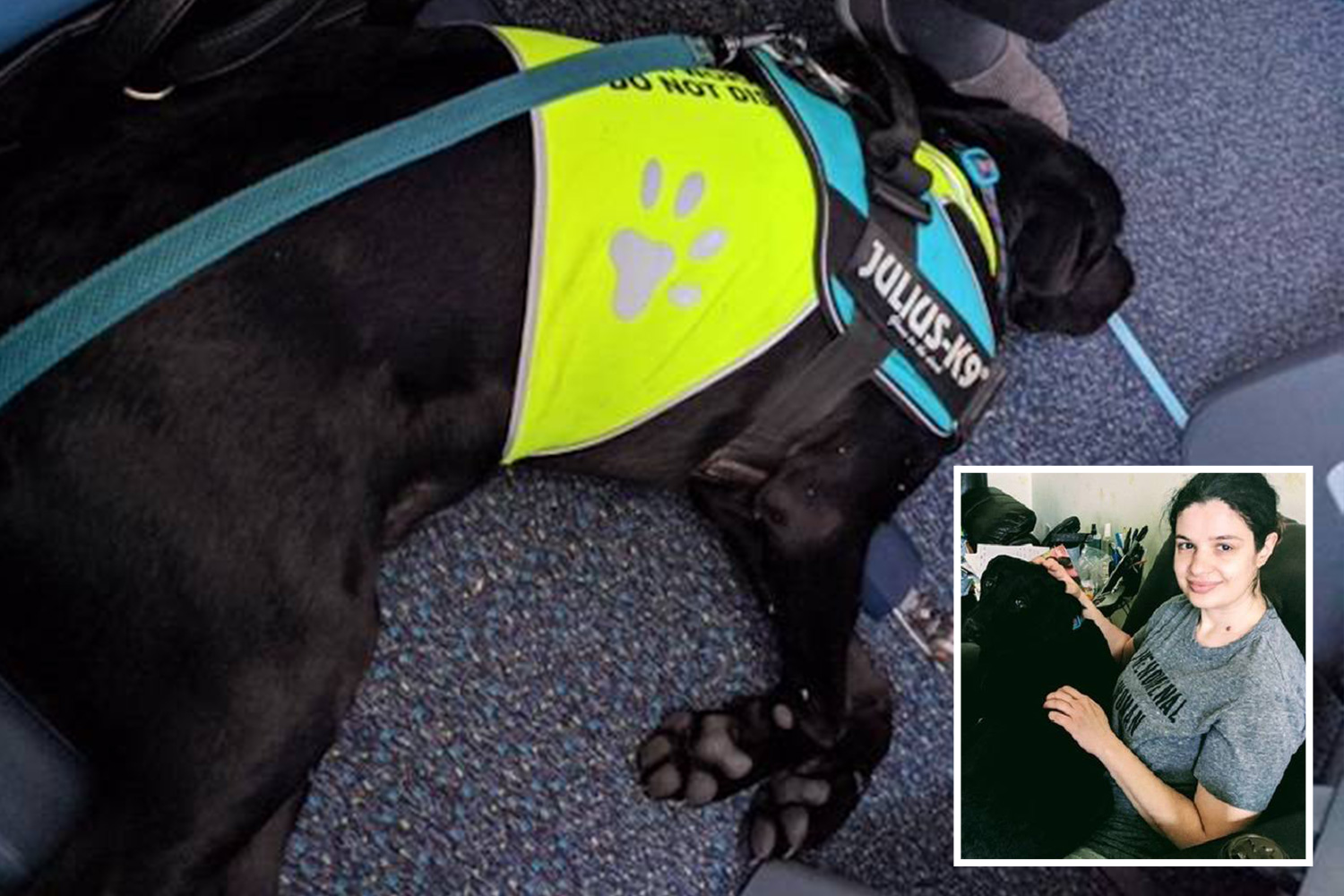 Passenger with PTSD left stuck at the airport after the airline bans his service dog from the flight - The Sun