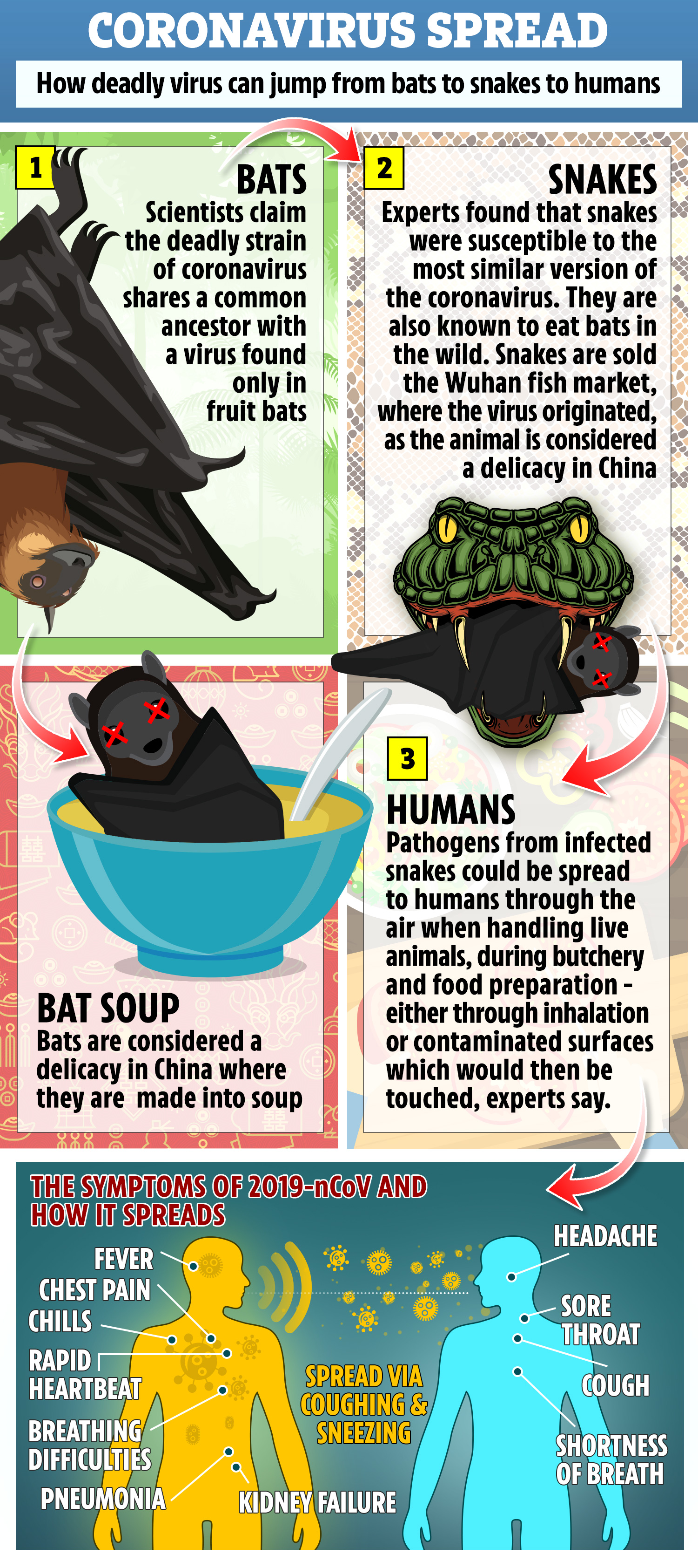 Coronavirus outbreak could be linked to bat soup say scientists