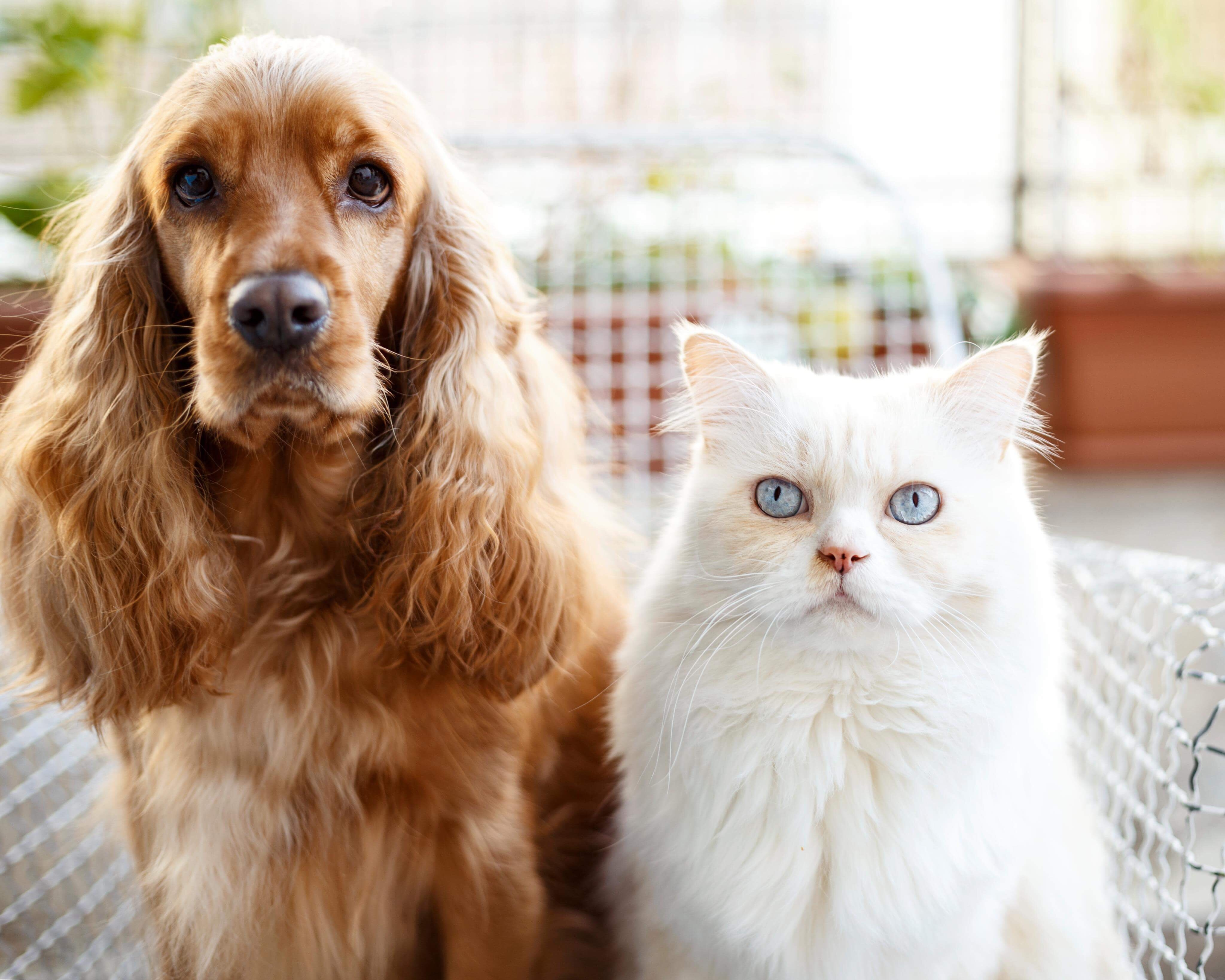 Can pets get coronavirus? How to look after your dogs and cats