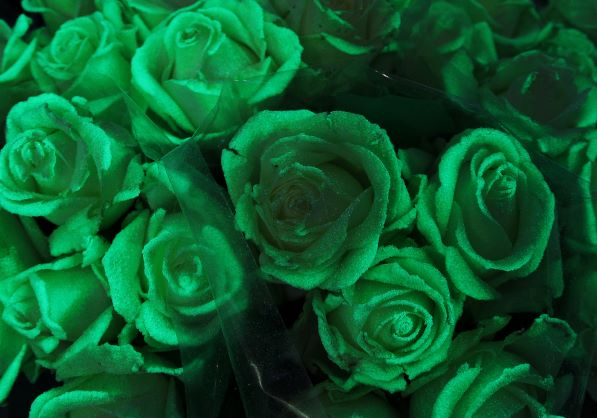 The roses give off an eerie green glow