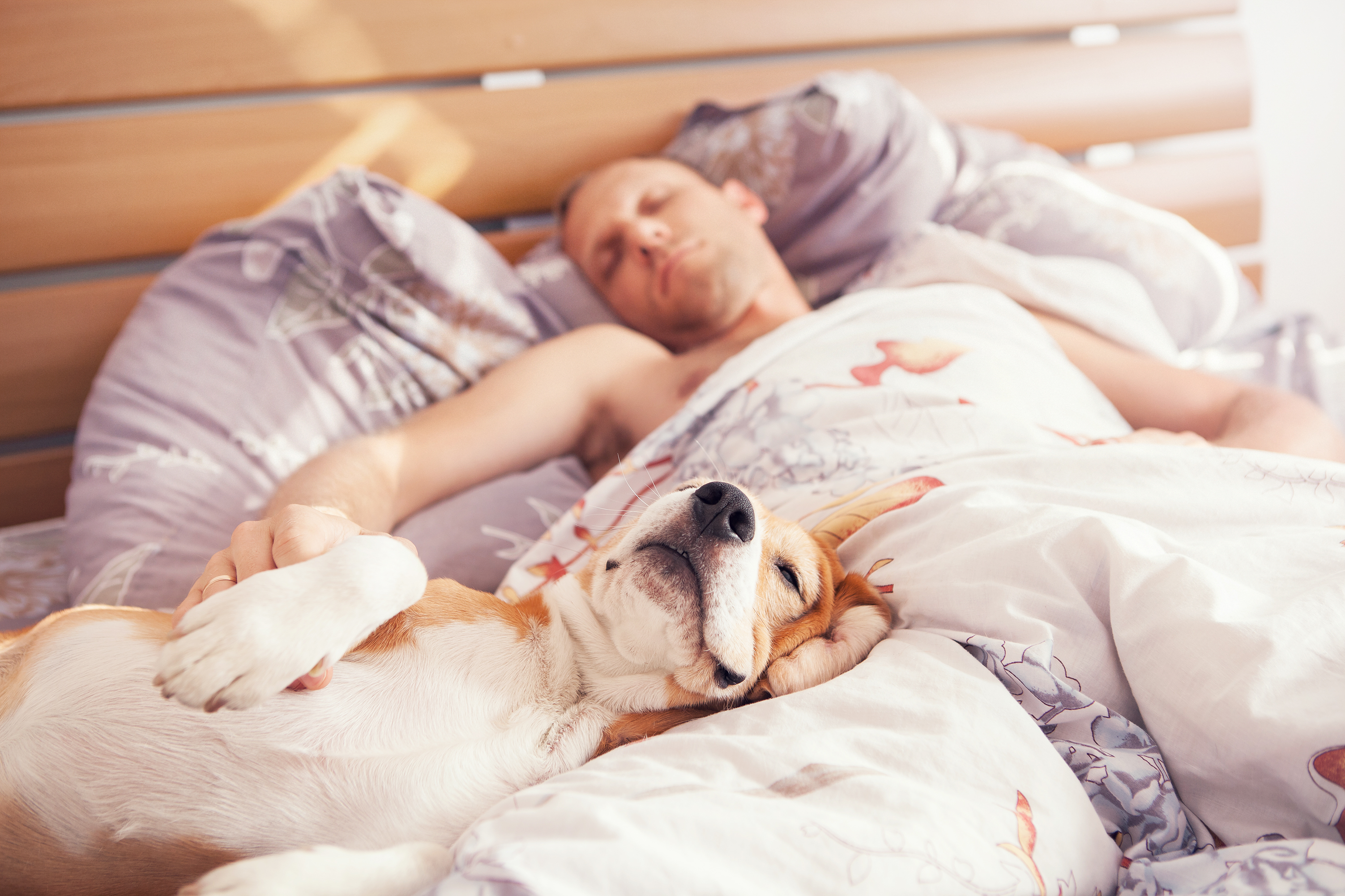 Four in ten owners let their dogs sleep next to them