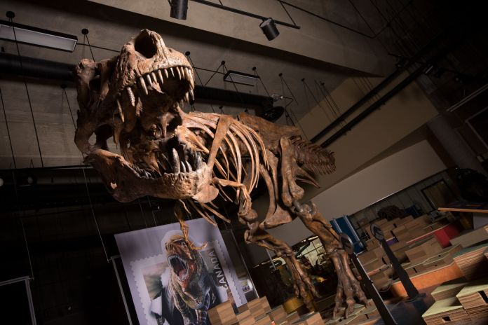 The elephant-sized creature would have been smaller than a T-Rex (pictured), which reached over 40 feet long