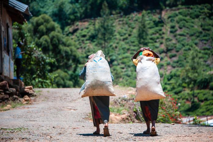 Women carry heavy sacks of tea in Sri Lanka