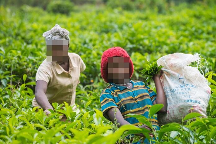 A child picks tea on a plantation in Uganda