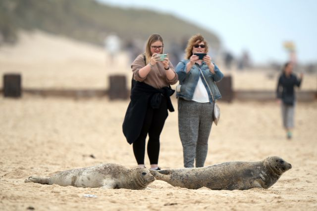 Visitors have been blasted for getting too close to pregnant seals