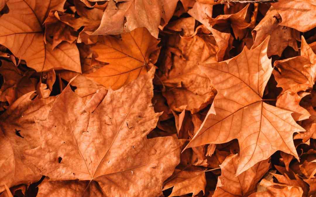 September Liturgical Living