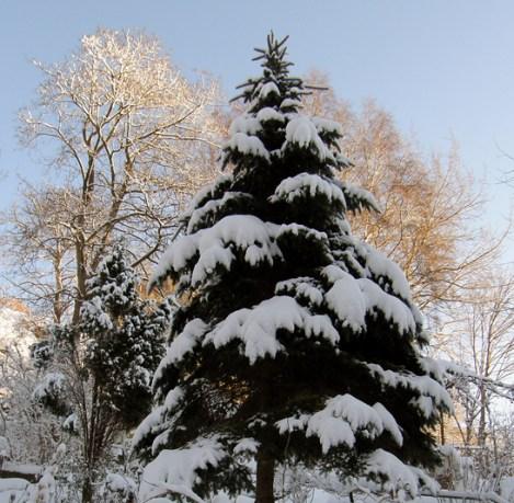 Christmascard tree