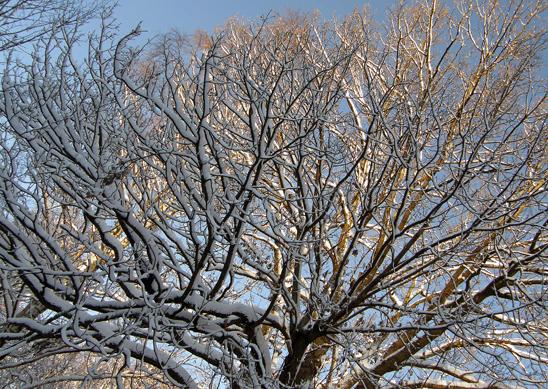 Snow tree sun