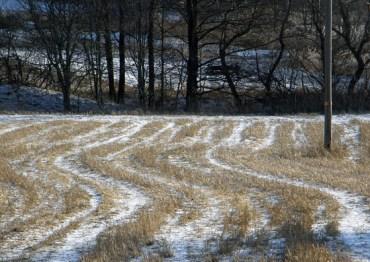Field under snow
