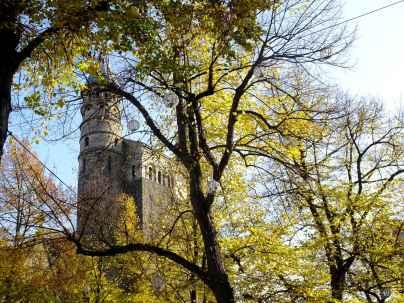 Tower of the Basiliek van Onze Lieve Vrouwe through autumn trees