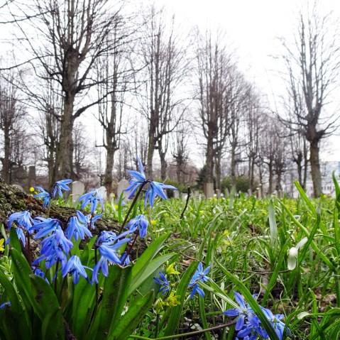 Spring in the graveyard