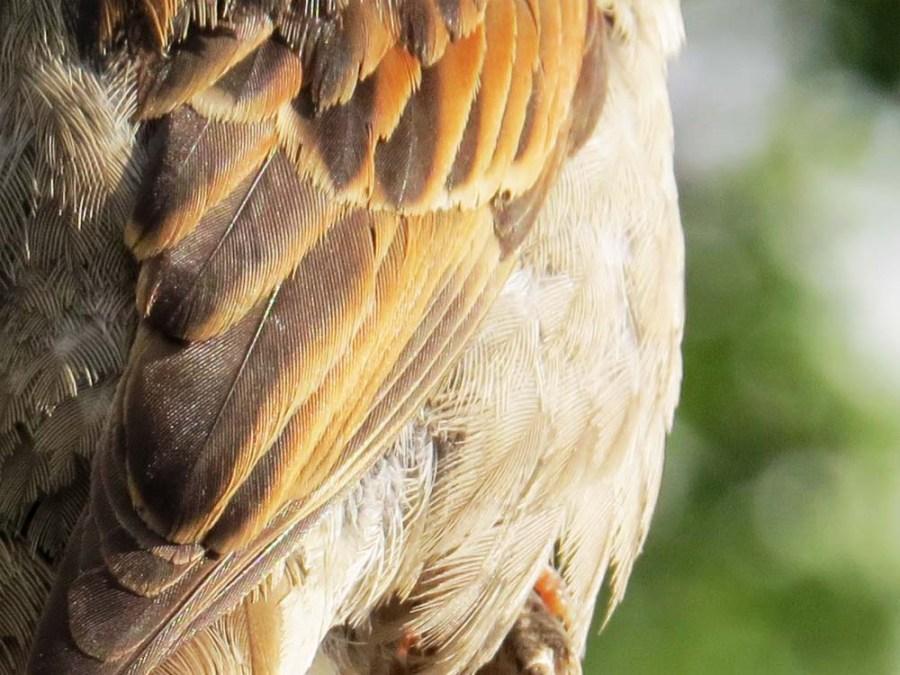 Jack sparrow detail