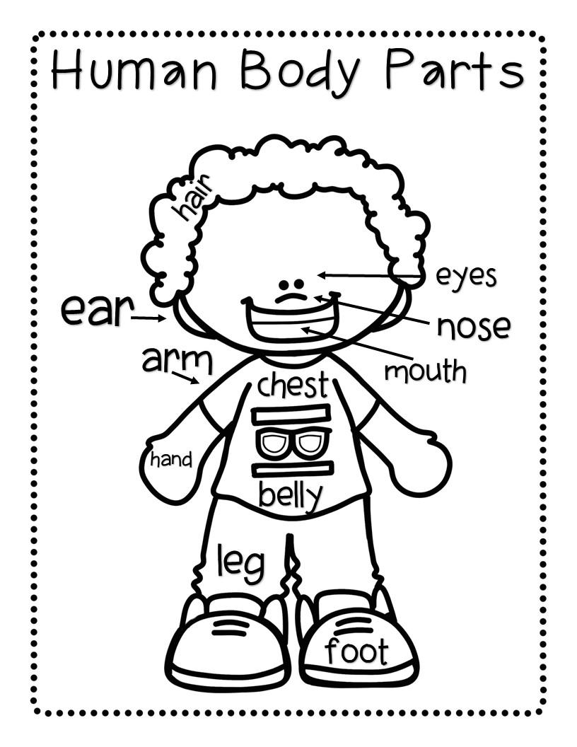 Label Body Parts Worksheet Kindergarten