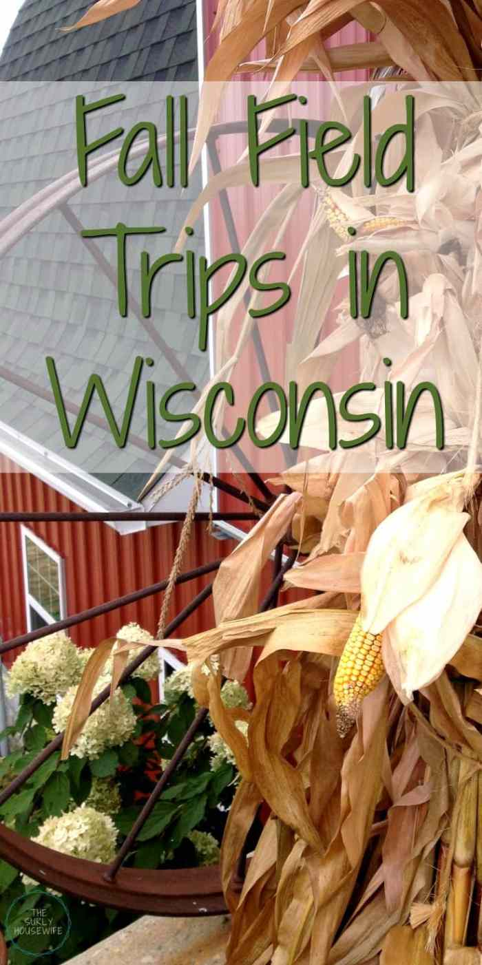 Fall is Wisconsin is the perfect time of year. A great time for homeschoolers to explore. Check out this post for 5 fall field trips in Wisconsin!