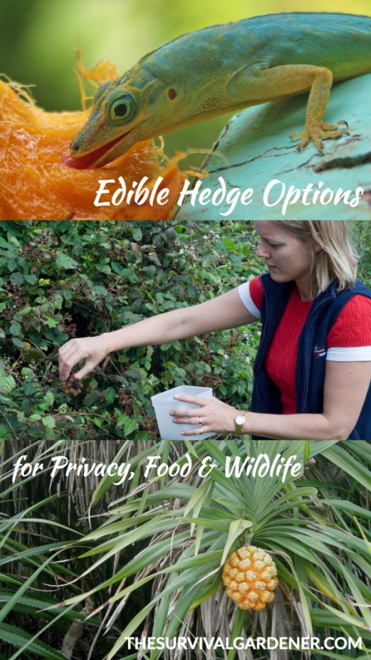 edible hedge ideas