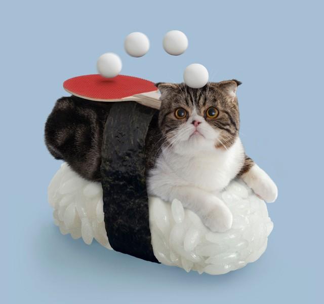 Miyao. Een mysterieuze kat. Gespecialiseerd in sluipen.