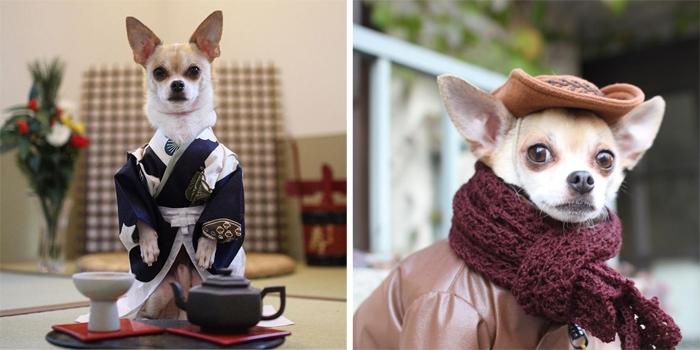Mon't, de fashionable chihuahua - zie zijn instagram
