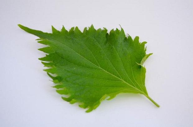 zomer-salade-roppongi-4
