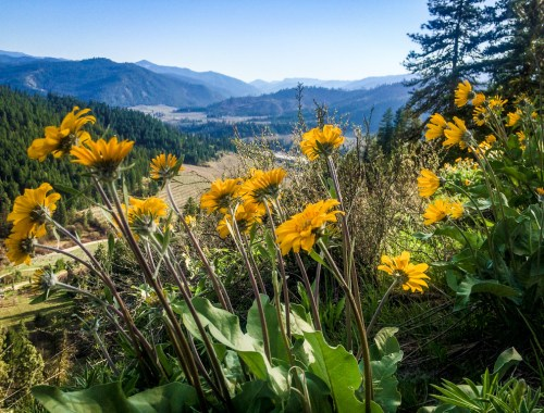 Sauer Mountain Trail, Peshastin, Washington