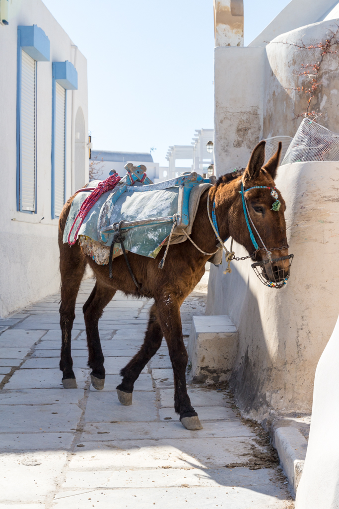 Donkey is Oia, Santorini