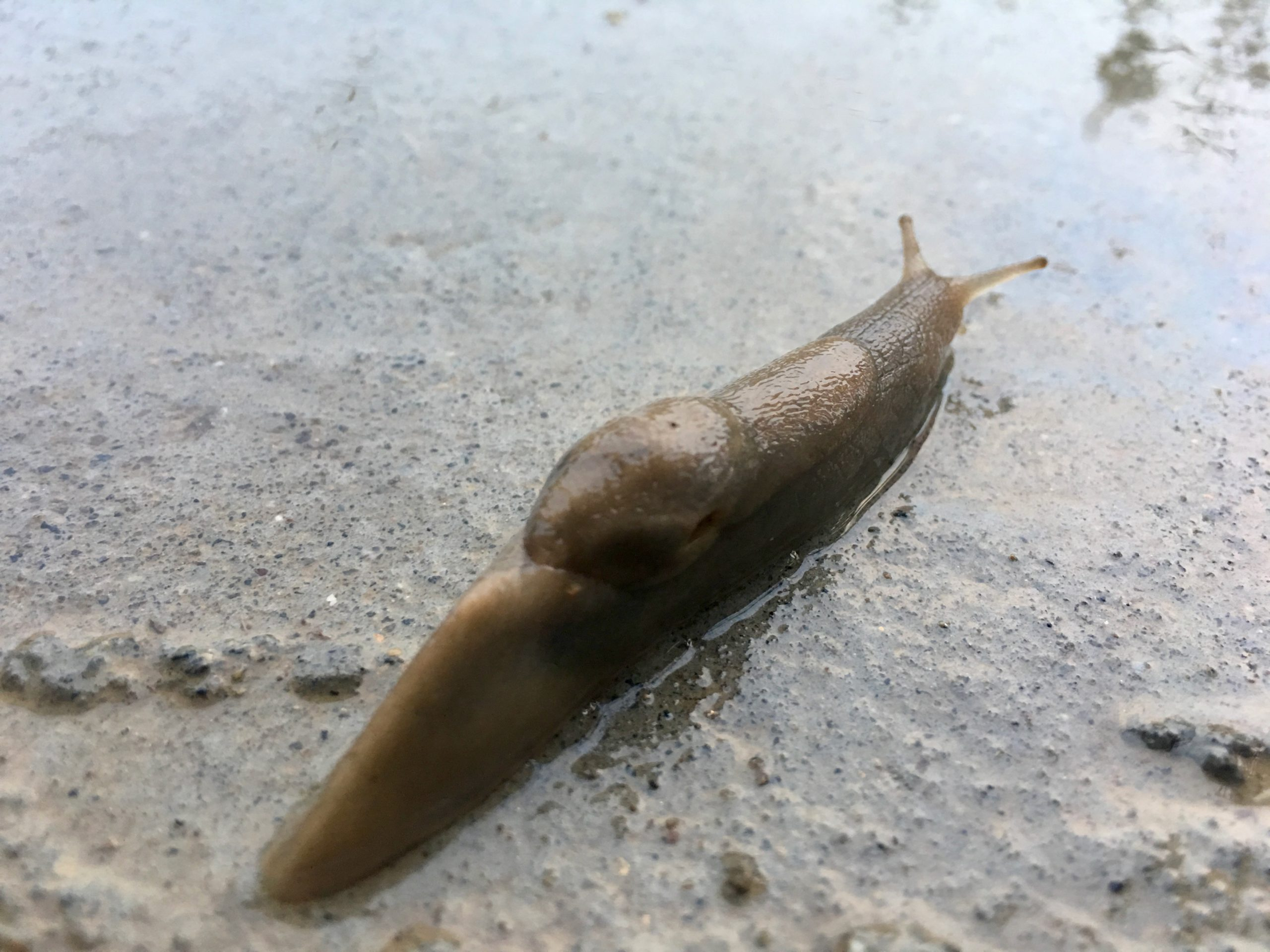 Slug Invasion 10