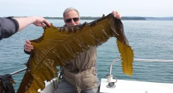 Islander Kelp FI