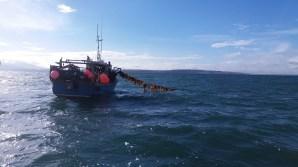 Islander Kelp14