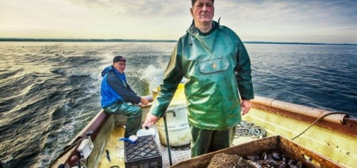 Lough Neagh Eels